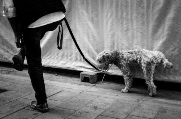 sabanillas para perros